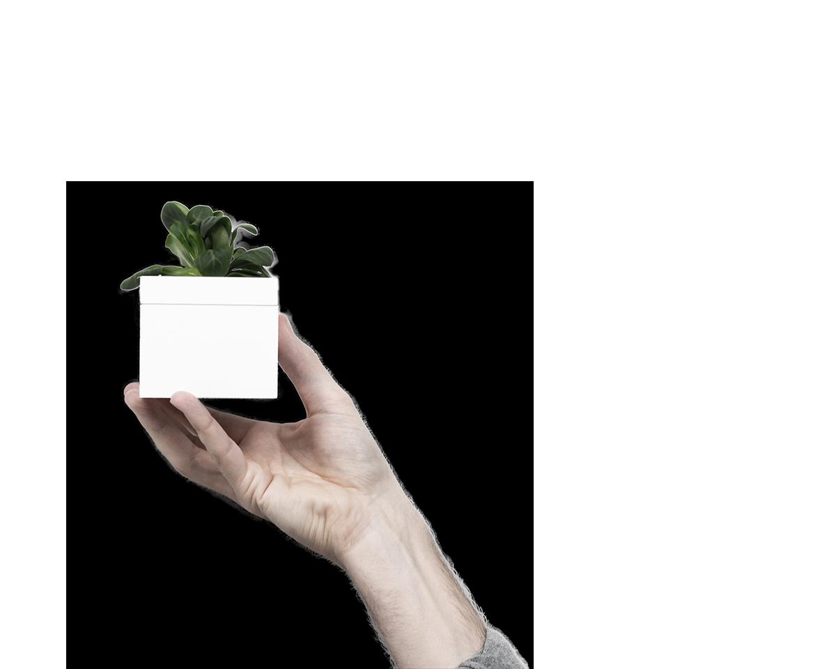 eva_microgreens_hand
